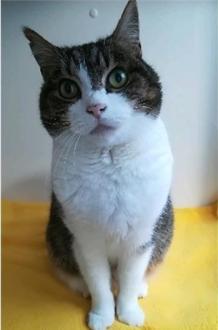 cat_image (7)