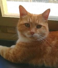 cat_image (1)