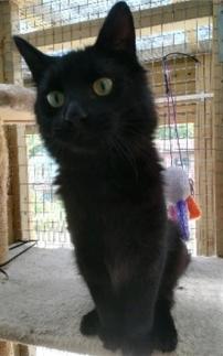 cat_image (5)