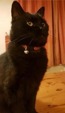 cat_image (4)