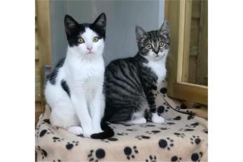 cat_image